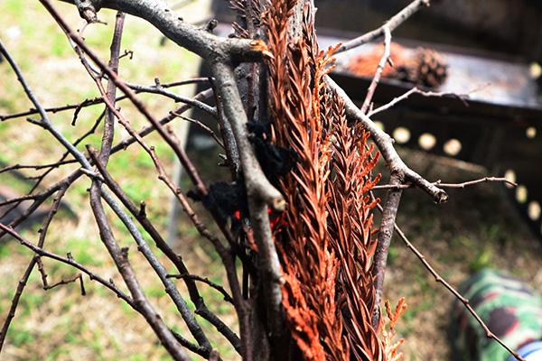 杉の枯れ枝